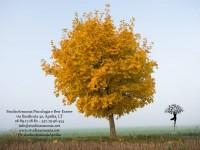 YOGA & MINDFULNESS: sentieri di consapevolezza per il riequilibrio di corpo e mente